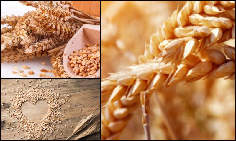 Tahıl Depolarındaki Önemli Unsurlar Nedir?