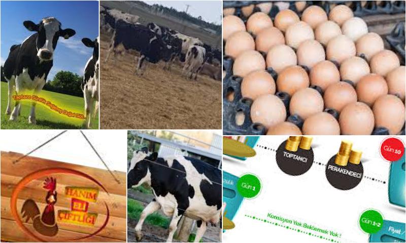Gerçek Köy Yumurtası Nasıl Anlaşılır?